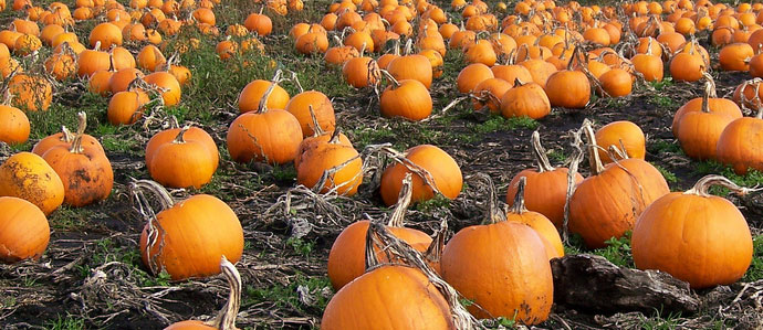 8 Pumpkin Ales for the Season