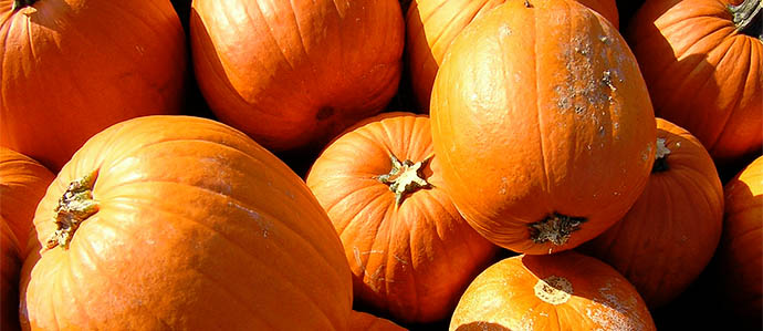 Pumpkin Beer: Debunking the Myths