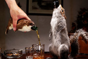 Craft Beer Portland | BrewDog is Releasing a $20,000 Beer Stuffed in a Taxidermied Squirrel | Drink Portland