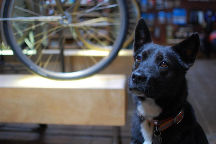 Where to Drink With Your Dog in Portland - Drink Portland